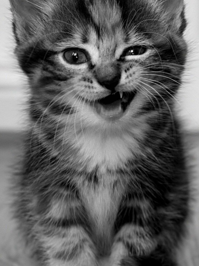 Pin By Belen Corpuz On Mobile Wallpaper Cats Baby Cats Kitten Wallpaper