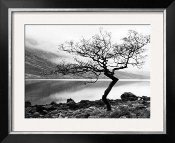 Solitary Tree on the Shore of Loch Etive, Highlands, Scotland, UK Photographic Print by Nadia Isakova at Art.com