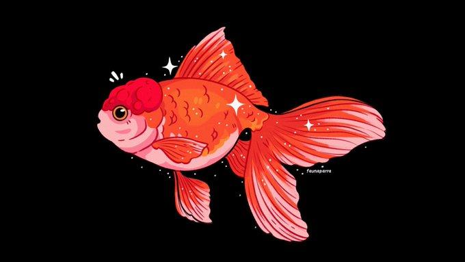 Nicole On Twitter Oranda Goldfish Goldfish Artwork