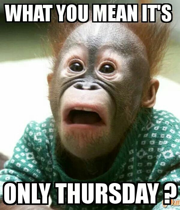 What you mean it's only Thursday??? | Thursday Humor ...