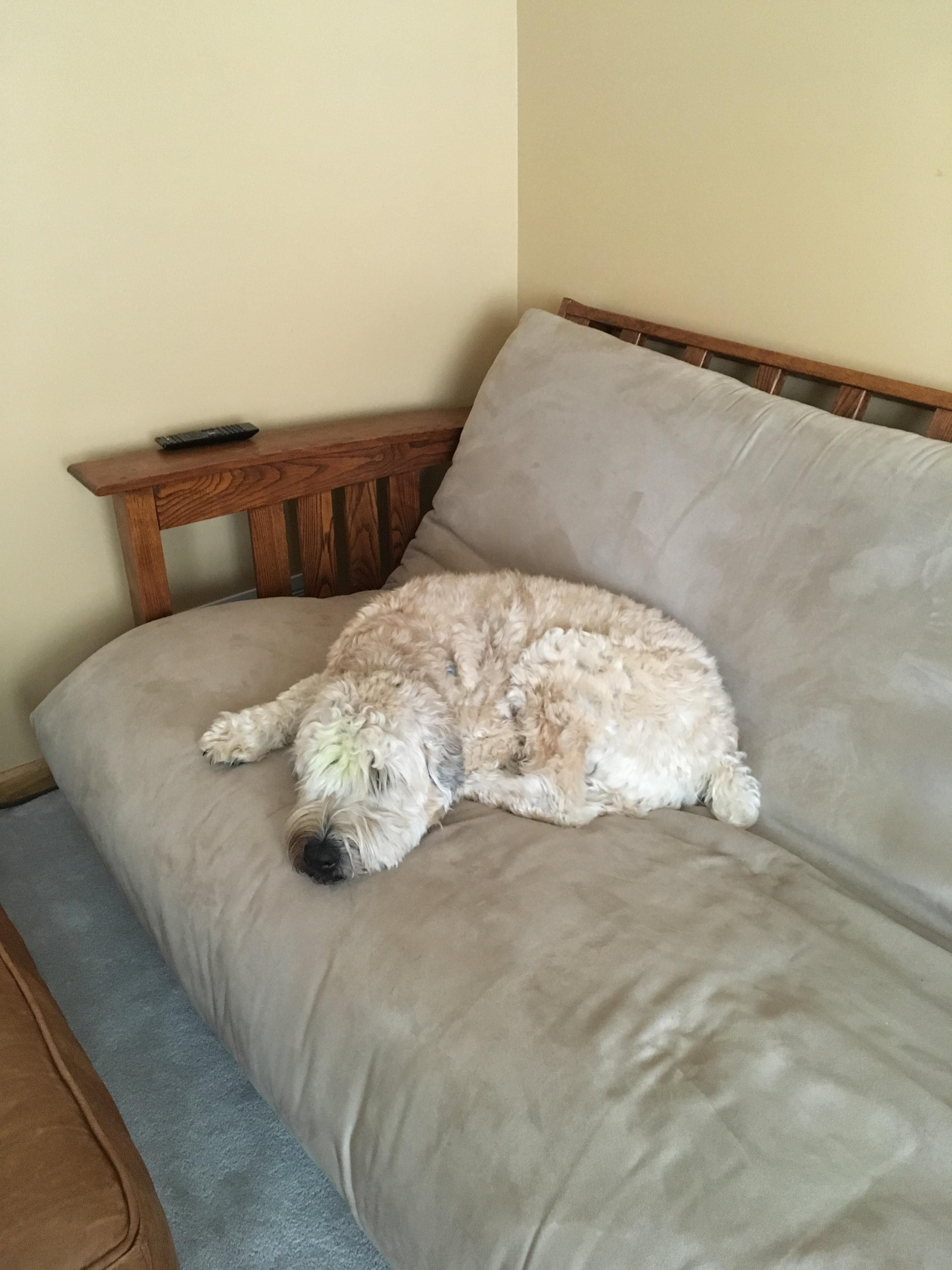 Our dog loves sleeping on our futon... And my bed... http