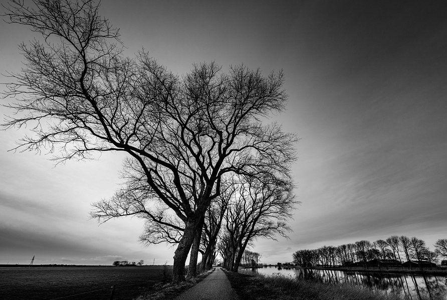 Alte Bäume in Schwarzweiß von Martien Hoogebeen Photography auf Leinwand, Tapete und mehr
