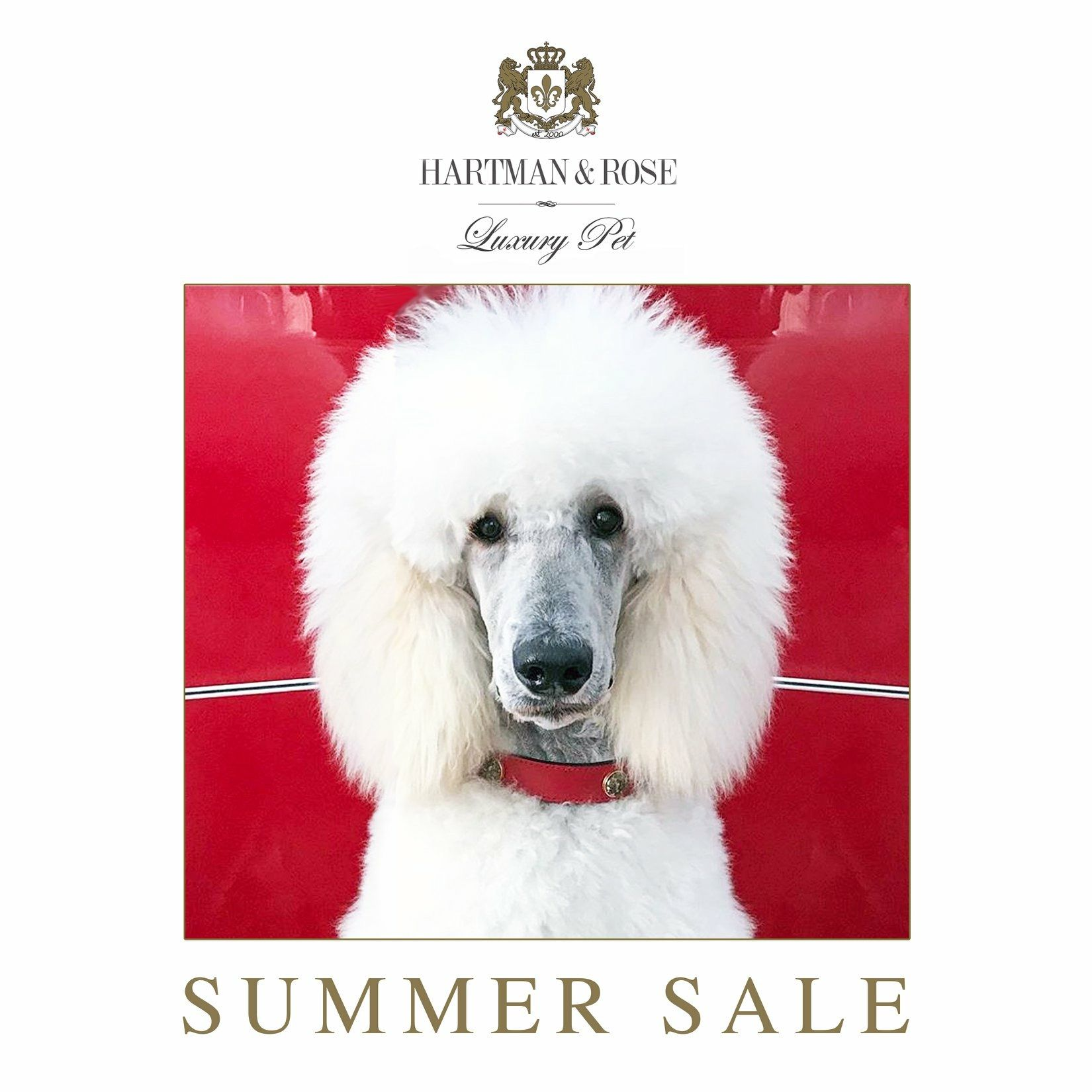 World's Finest Dog Collars & Leads SAVE 30% use code: CHRISTMAS.  www.hartmanandrose.com  @hartmanandrose #hartmanandrose. This is Duke the handsome Standard Poodle from Sydney, Australia wearing the Au Naturale collar in Ferrari Red with genuine Unikite stones. Duke is a Libra like me. @duke_thepoodle    Love Your Dog. Spread the Love ❤️