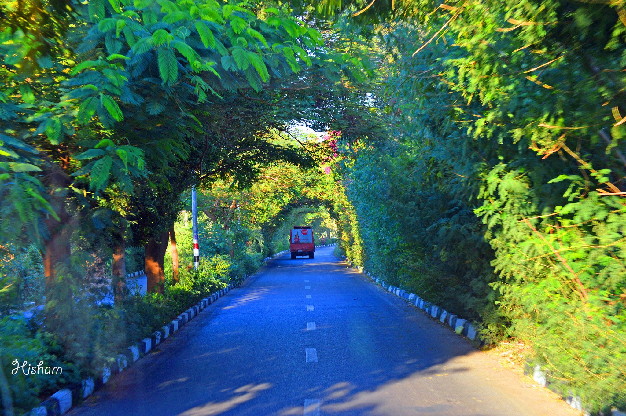 On the road. - Luxor City, Road, Trees, Green color, Light, Car ...