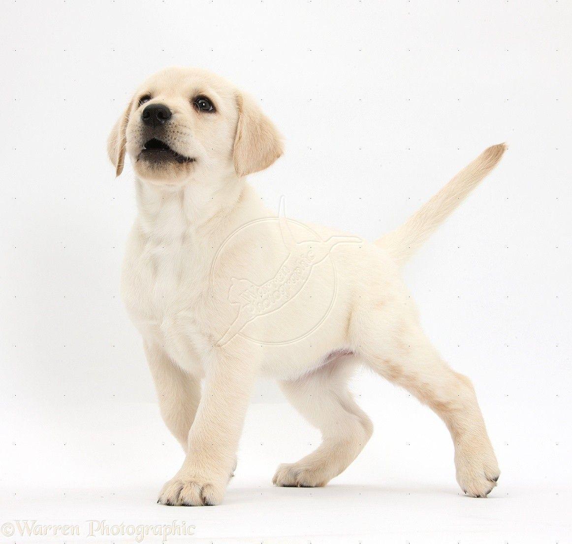 Dog Names Popular Male And Female Dog Names Pets World Unusual Dog Names Dog Names Female Dog Names