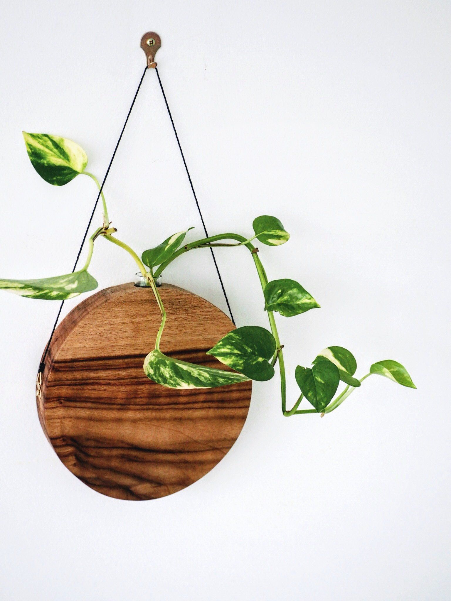 High Quality Wall Decor , Timber Vase , Decor , Handcrafted , Handmade Decor , Camphor  Laurel , Wall Accent , Decorative Items , Hanging Plants By FabianaLoschi  On Etsy