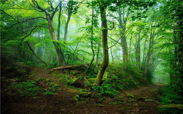 Spring Woodland Magic Forest Full Wall Mural Photo Wallpaper Print Home 3d Decal Ebay Forest Wall Mural Forest Mural Tree Wall Murals