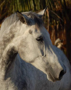 I had a horse that looked just like this. Until it went psycho and couldn't be broken. So, she went bye bye!