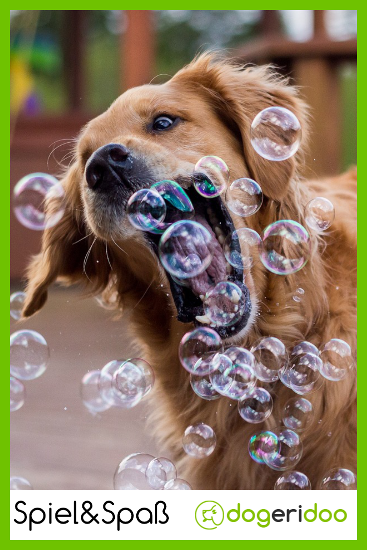 Spiele Für Hunde Im Haus