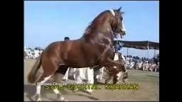 Resultado de imagen para caballos bailadores