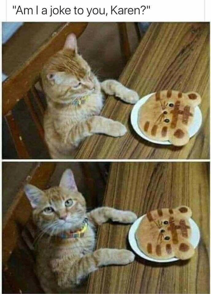 Karen Meme Funny Animal Pictures Funny Animal Memes Funny Cat Memes