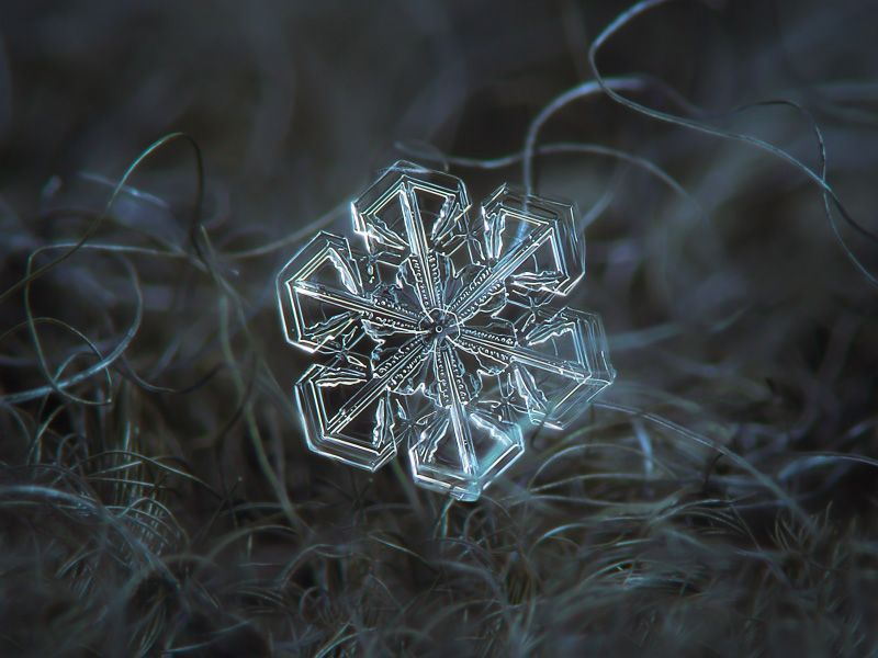 Image result for Flower-like snowflakes