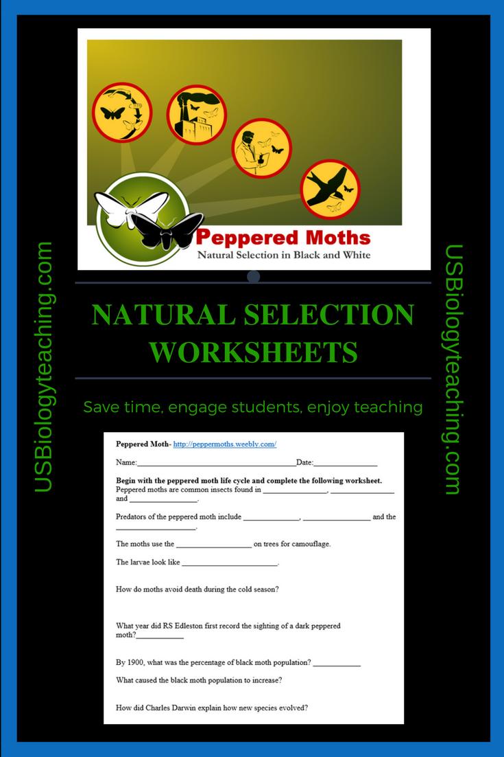 Evolution And Natural Selection Worksheets Insect Life Cycle Evolution Natural Selection [ 1102 x 735 Pixel ]