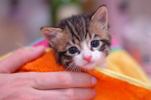 Cats Do Not Need Baths Or Showers Very Often Since They Groom Themselves Daily But Sometimes Accidents Happen That Requ Cat Day Cats Kitten Love