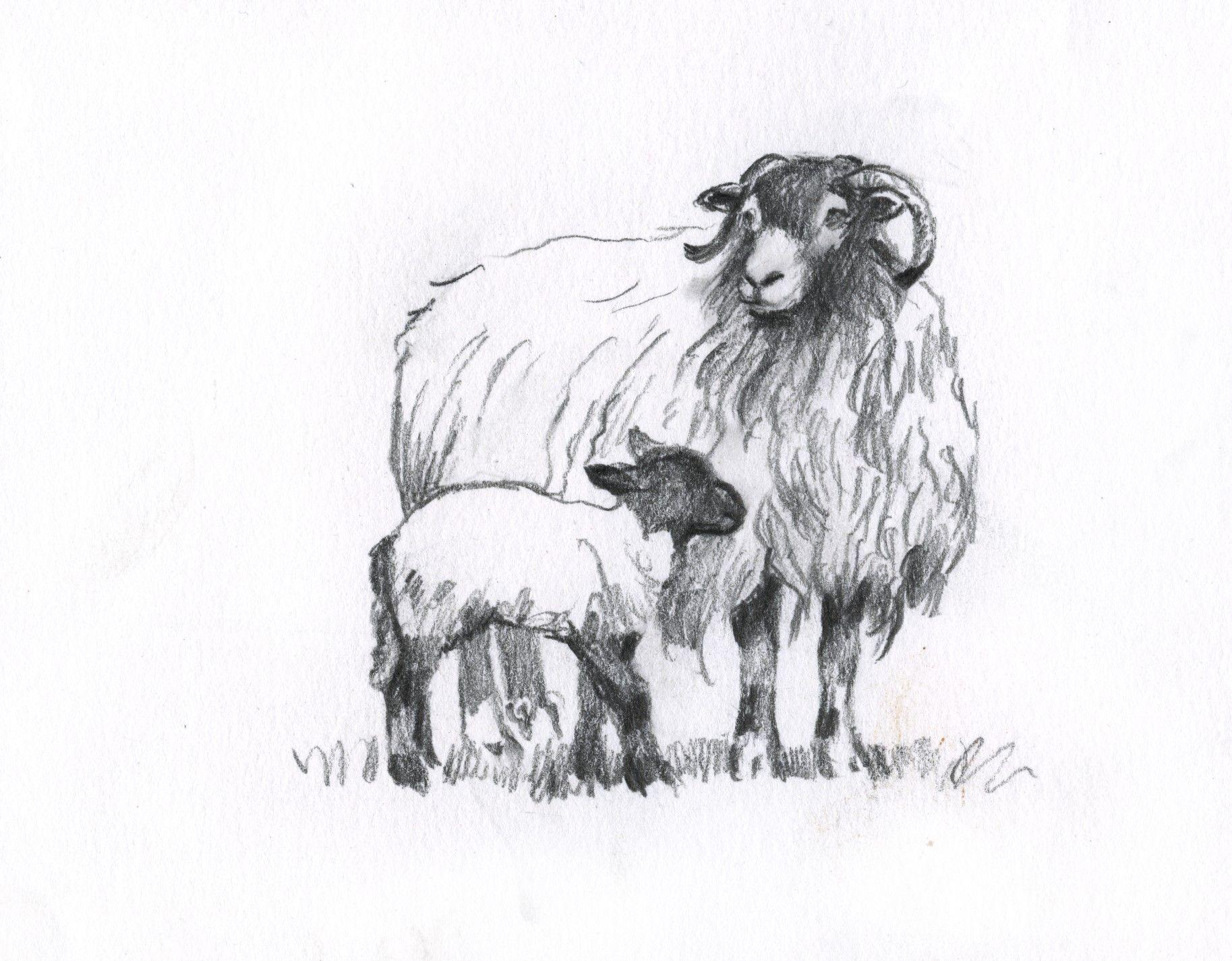 Картинки с овцами карандашом