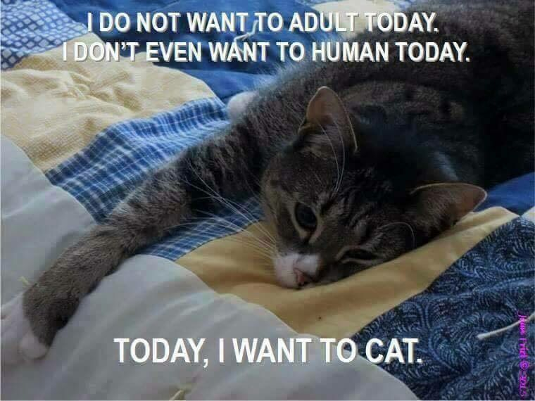 Don't want to adult today