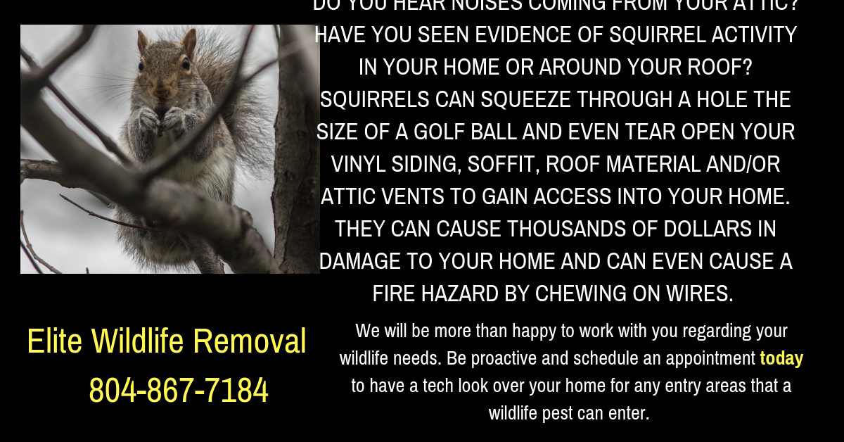 Visit Our Website At Www Eliteanimalsolutions Com Bats Vector Rabies Snakes Raccoons Squirrels Skunks Groun Squirrel Vinyl Siding Soffit How To Remove