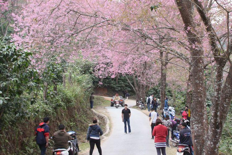 Gambar Menara Eiffel Dan Bunga Sakura Selain Menara Eiffel Lihat Juga Koleksi Menara Kami Berikutnya Di Bawah Ini Gambar Ke Menara Eiffel Bunga Sakura Bunga