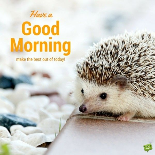 A New Day Starts Good Morning Pics Hedgehog Pet Hedgehog Animal Cute Animals