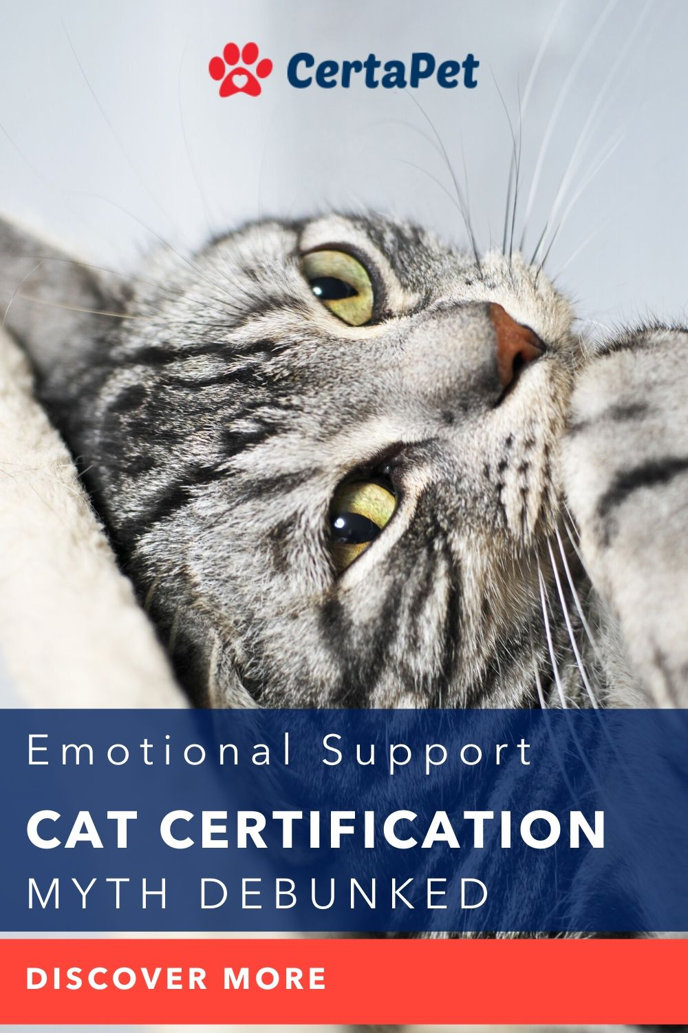 Emotional Support Cat Certification Myth Debunked in 2020