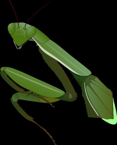 Praying Mantis Head Clipart Free Google Search Clip Art Free Clip Art Art