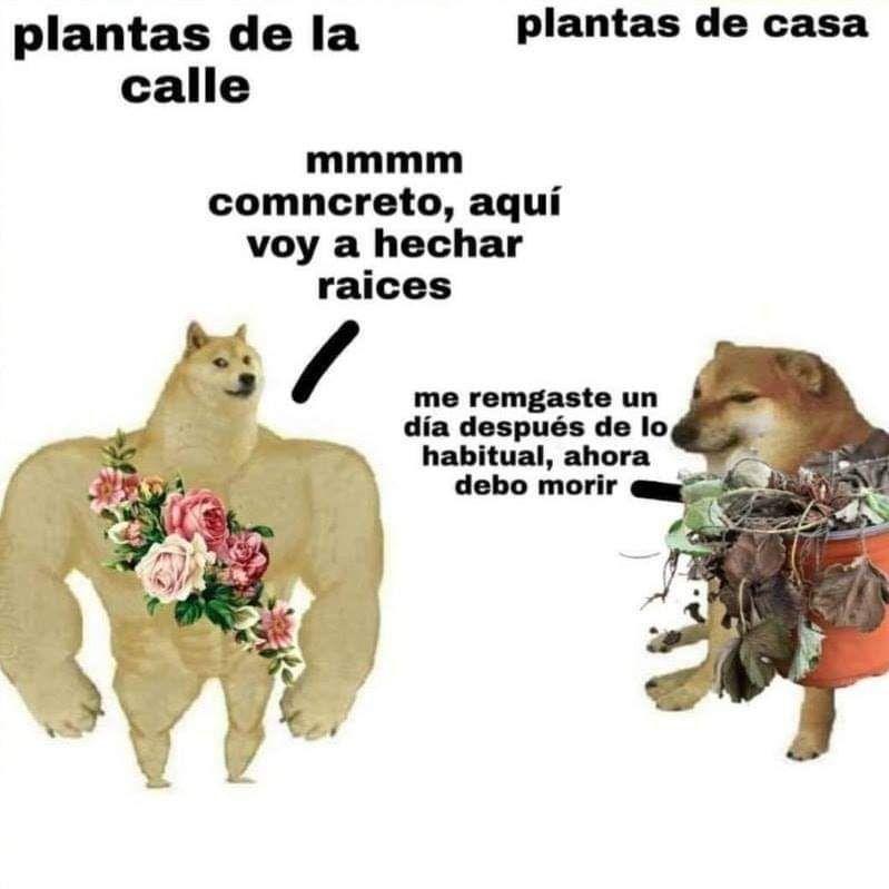 Doge Meme Vs Cheems Meme Perro Grande Perro Chico Memes En Espanol La Mejor Recopilacion De Memes Lo Mas Viral D Memes Memes Divertidos Memes Sarcasticos