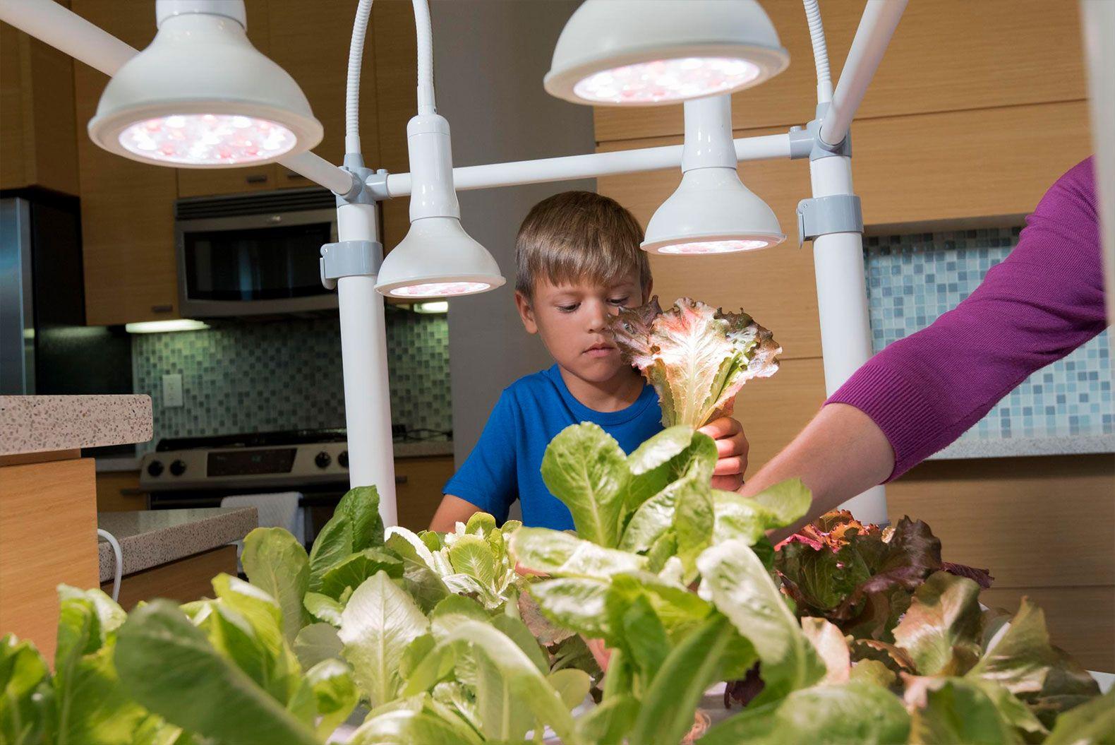 Harvest fresh veggies all year round with the energy efficient growbox grow box opcom hydroponic garden indoor garden indoor gardening kit workwithnaturefo