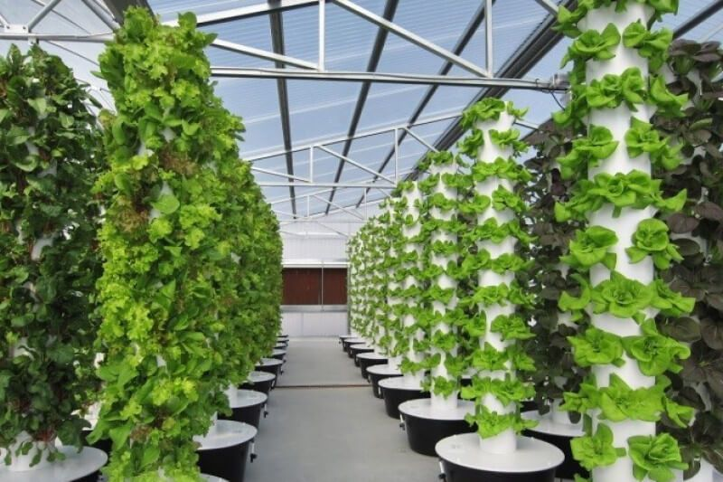 What is the Difference Between Hydroponics and Aeroponics ...