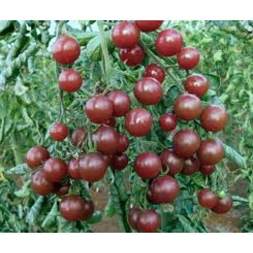 Black Cherry Tomato Heirloom Tomato Seeds Tomato 400 x 300