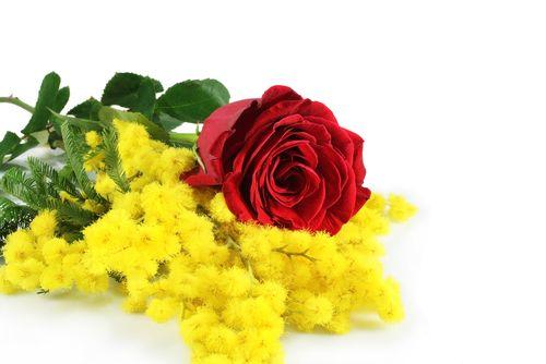 8 Marzo Festa della Donna tre alternative Hi-Tech  #follower #daynews - http://www.keyforweb.it/8-marzo-festa-della-donna-tre-alternative-hi-tech/