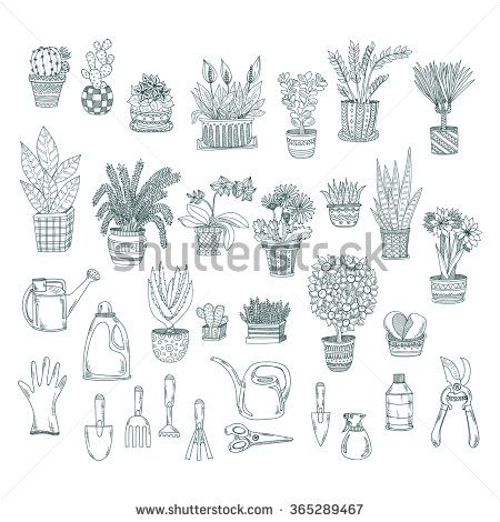 house plants drawing. big set of cute hand drawn house plants in pots including cactus dracena aloe drawing