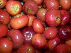 Cinnamon Rosehip Syrup Recipe http://herbsandowls.com/cinnamon-rosehip-syrup-recipe/