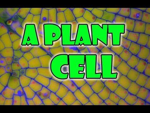 Plant Cell - Biology 101 - Basics
