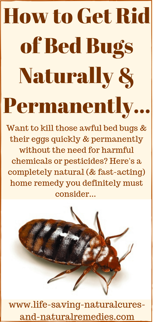 A Sure Fire Way To Get Rid Of Bed Bugs Naturally At Home Fast