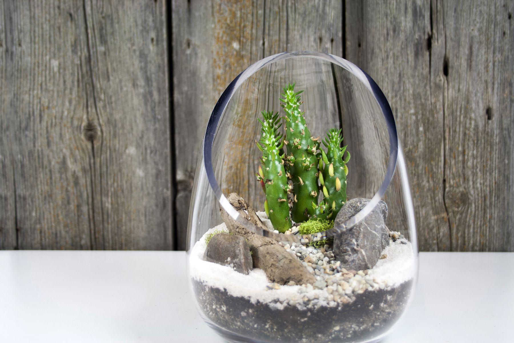 Cactus Terrarium 02 - Plant Terrariums