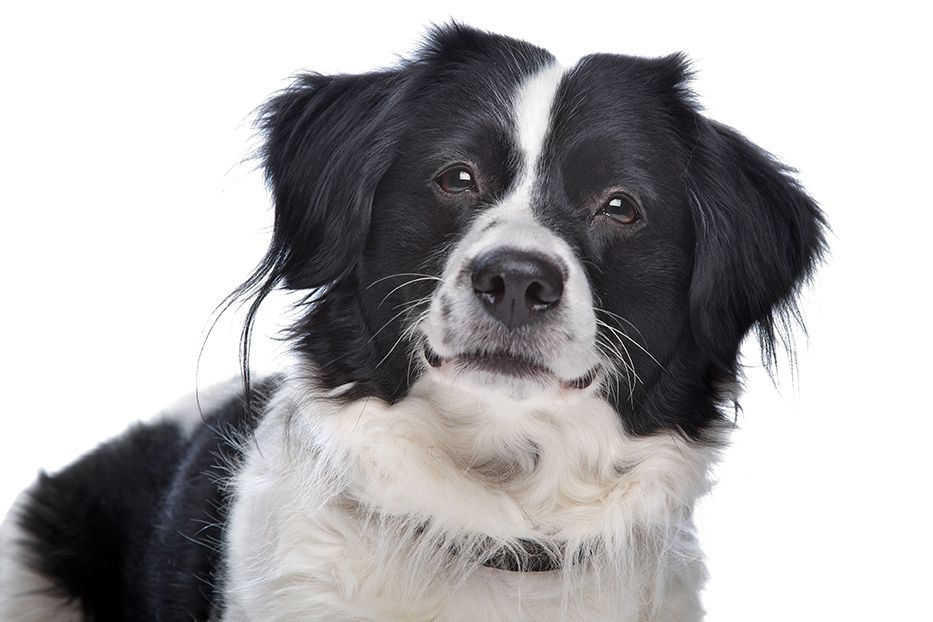 Top Border Collie Names 25 Wonderful Names For Your Pup Dog