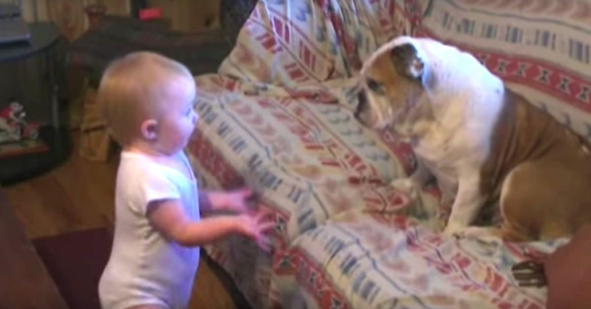 Dad Captures Baby Ranting To Their Bulldog Baby S Conversation