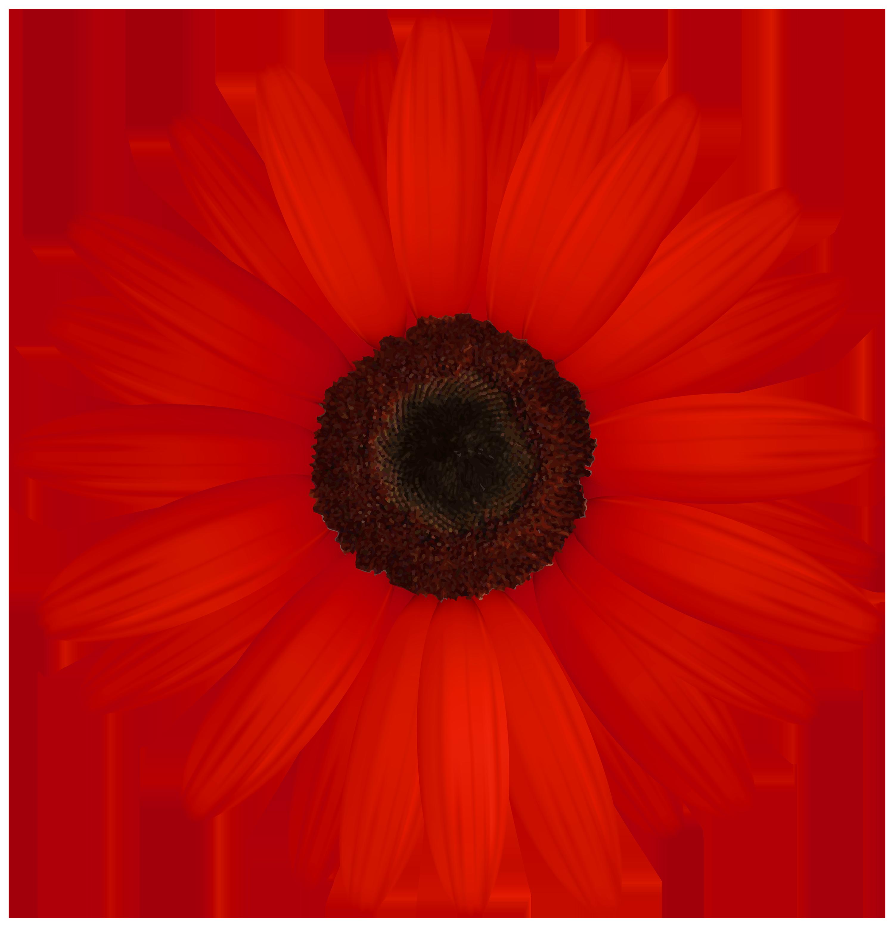 Red Gerber PNG Clipart Clip art, Flower art, Art images