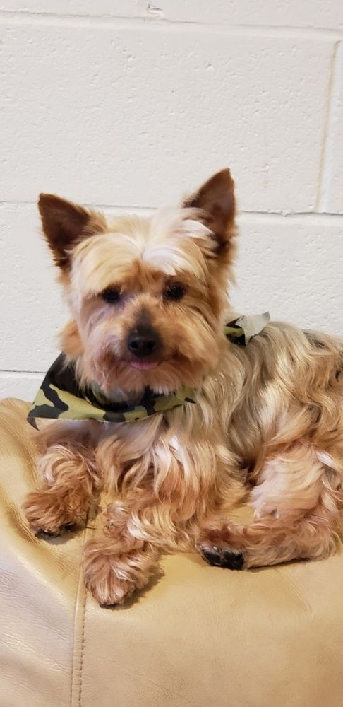 Dogs For Adoption Near Columbus Oh Petfinder In 2020 Animal
