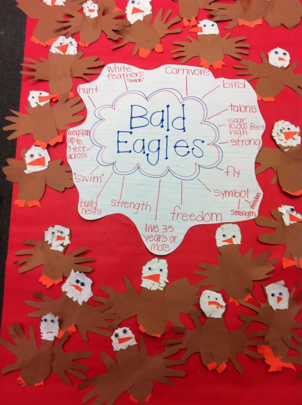 Bald Eagle Project