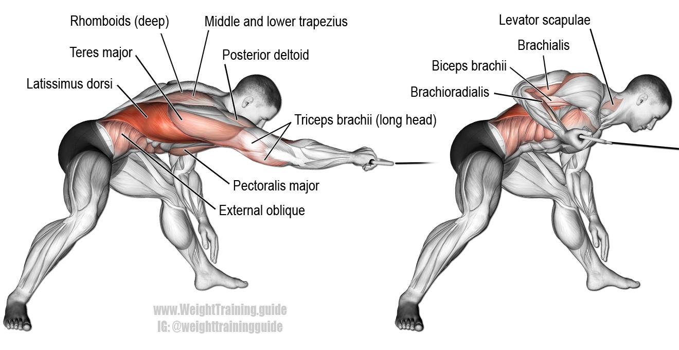 Pin on Body Strength