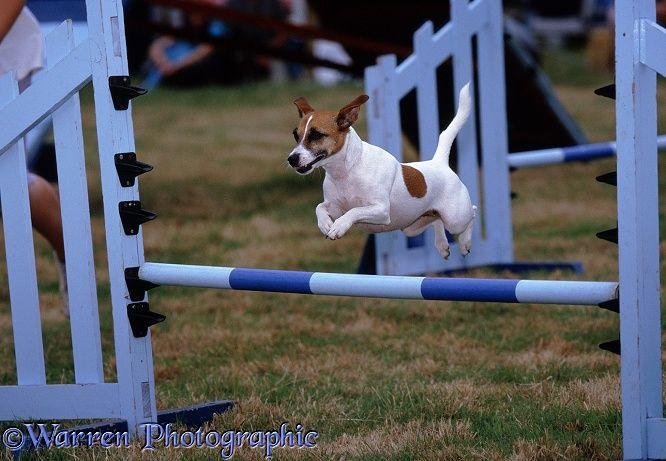 agility perros segunda mano