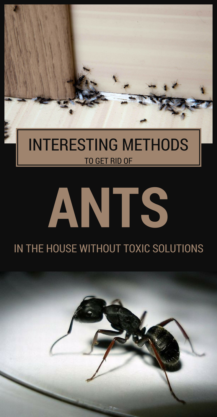 Interesting Methods To Get Rid Of Ants In The House