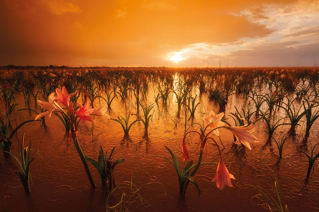 How to make your sunset pics sing | Beautiful landscapes, Namibia, Out of  africa