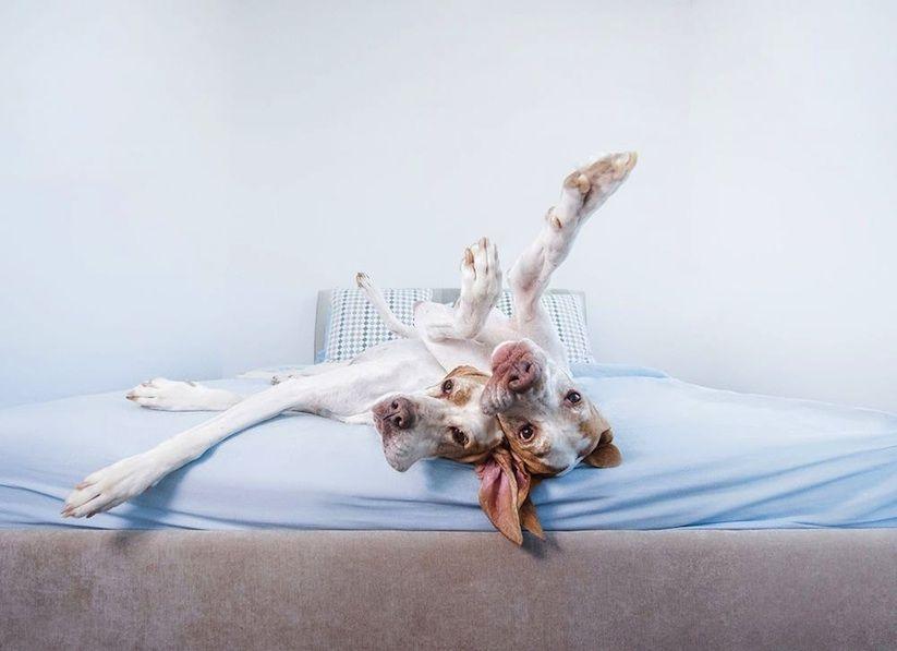 Die aus Neuseeland stammende Fotografin Serenah Hodson begeistert mit ihren herrlichen Dog-Portraits mittlerweile eine weltweite Fangemeinde.