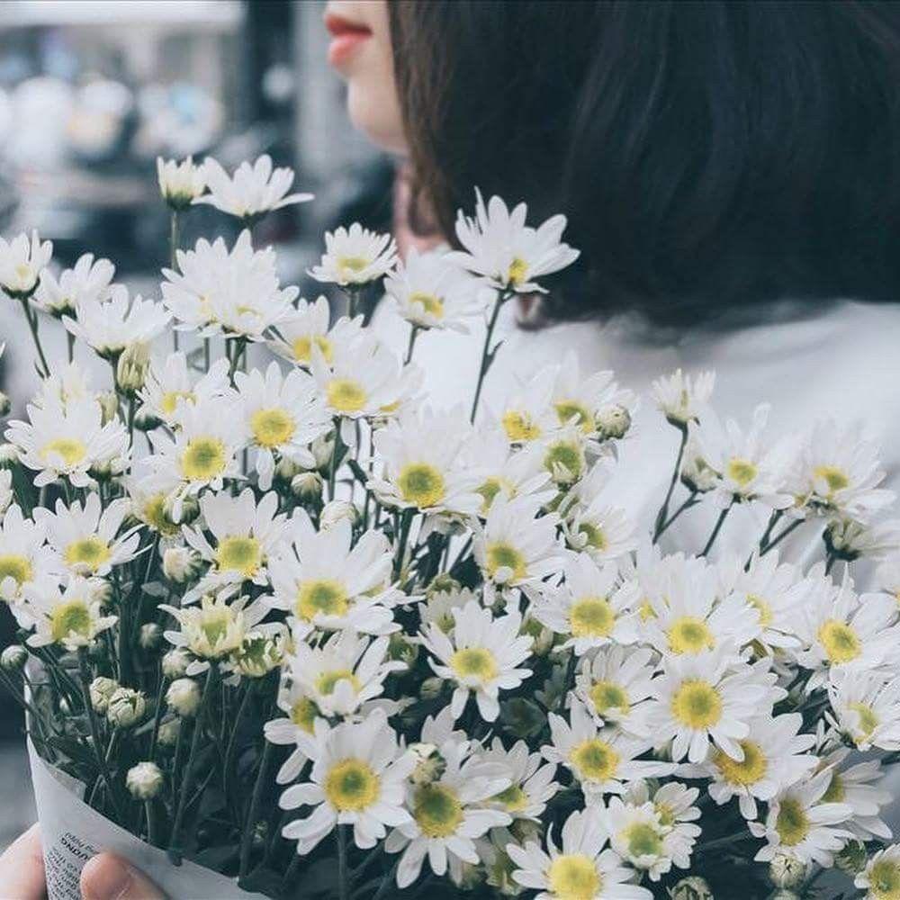 Hình ảnh trong X của Limbo | Hoa cúc họa mi, Phong cảnh ...