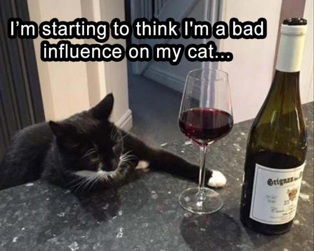 I-think-my-cats-been-hanging-around-me-to-long funny pictures with captions pictures funny