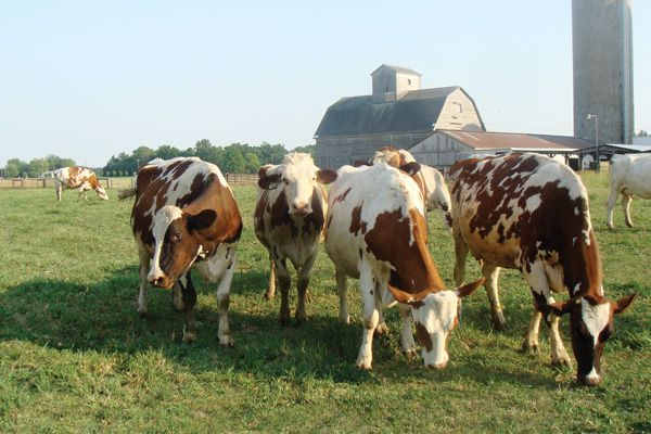 Ft Wayne friends - anyone else interested in raw cow and goats milk???