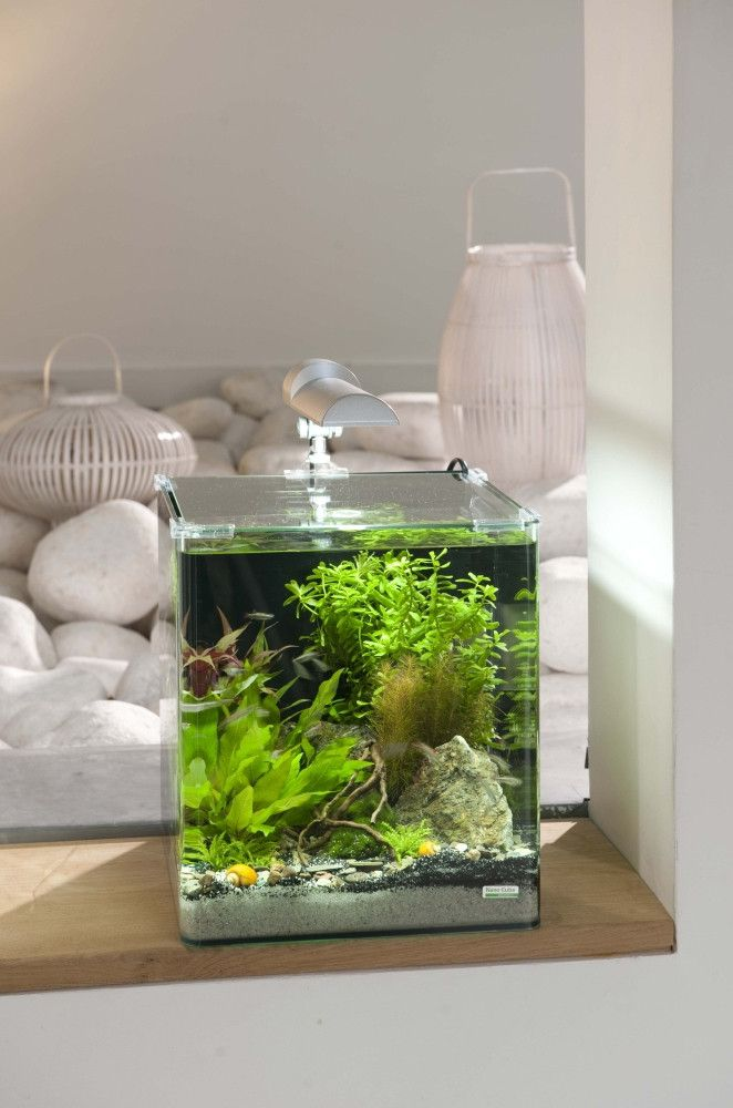 10 aquariums pour d buter l 39 aquariophilie aquariums pinterest aquarium nano petit. Black Bedroom Furniture Sets. Home Design Ideas