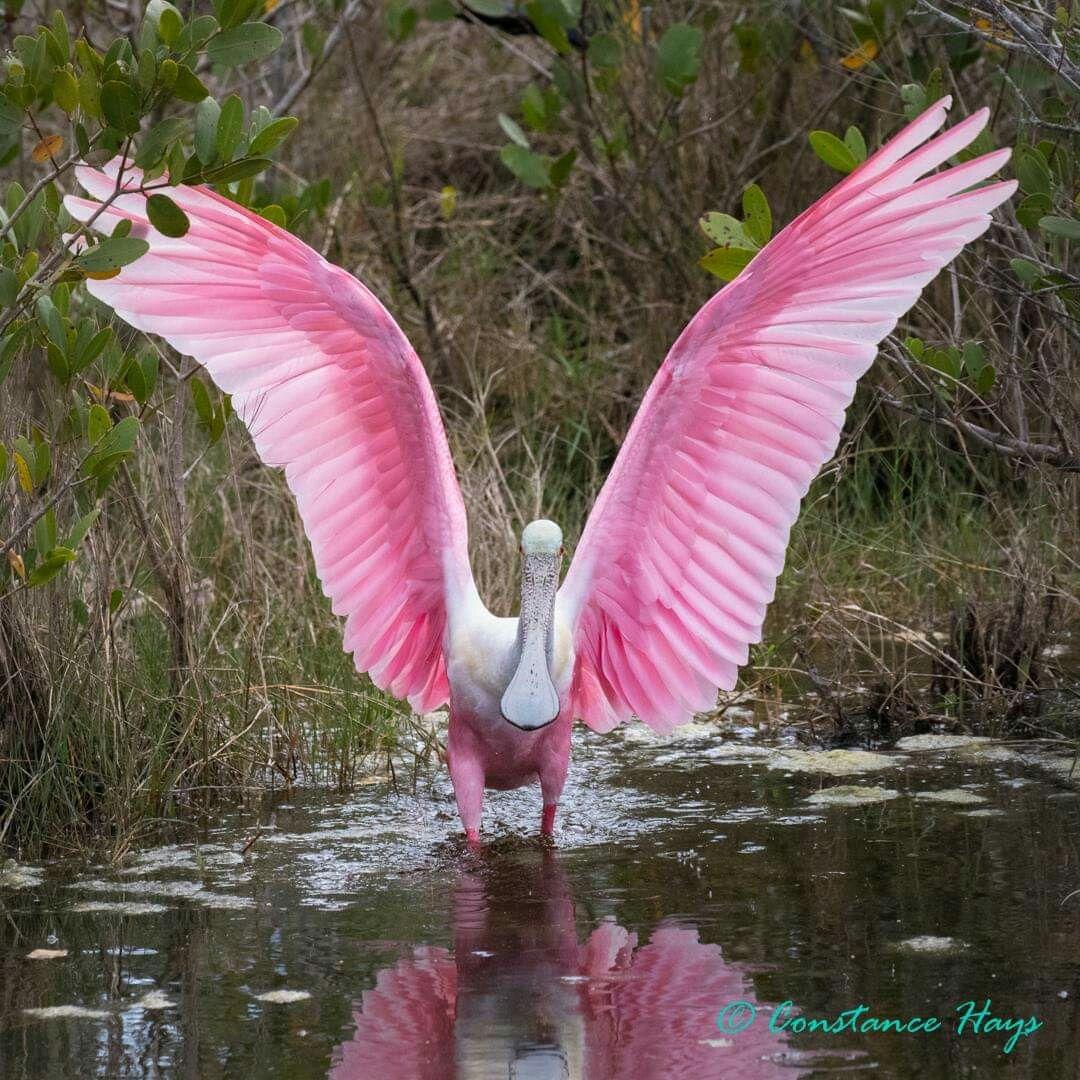 Pin by Rita Atkinson on BIRDS National wildlife refuge